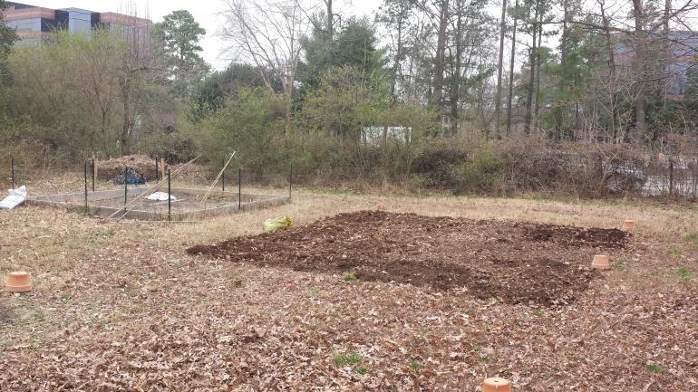 New garden area next to fenced compost garden