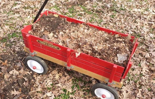 Wagon full of composted leaves