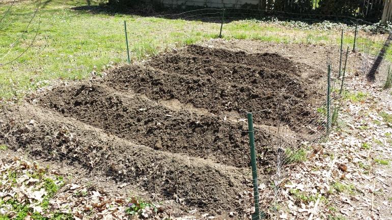 Rows of soil in the garden