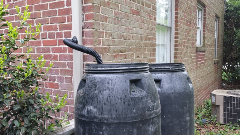 Rain barrels connected to downspout